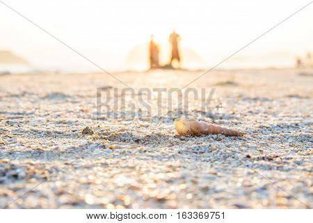 Shells or Conch on sea beach in the morning and lover on the background.