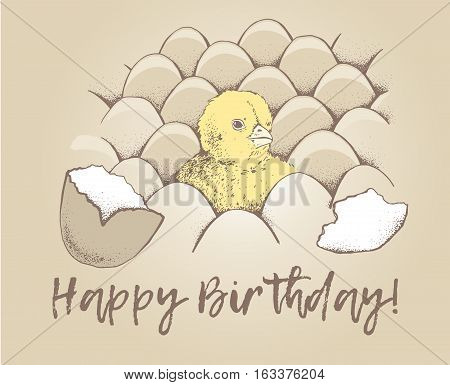 Chick peeking out of shell eggs sketch illustration for print, mobile, infographics, greeting card, poster. Hand drawn chick picture. Chicken vector image. Vintage engraving style. Happy birthday