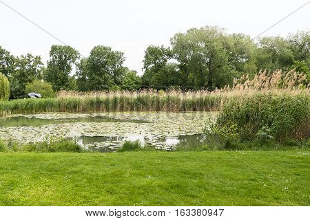 View on danube park with green grass, trees and a lake with reed, austria