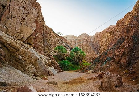 Oasis in the mountains. Nature Background with sky and rocks