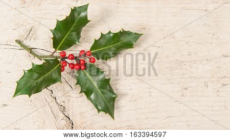 Holly ilex christmas decoration on a scaffolding wooden background