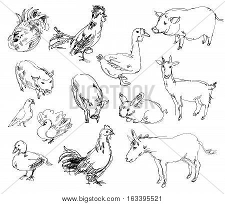 Farm animals. Set. Hand-drawn. Isolated on white background