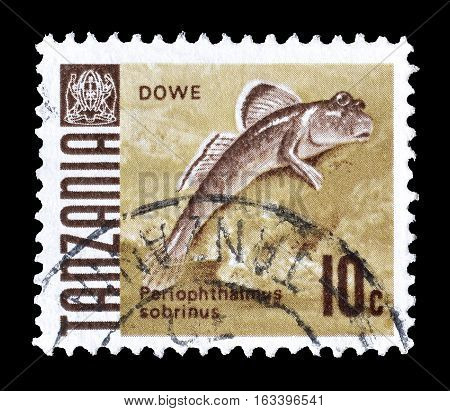 TANZANIA - CIRCA 1967 : Cancelled postage stamp printed by Tanzania, that shows Mudskipper.