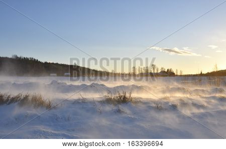 Midwinter day with stormy weather and snow over a meadow in the North of Sweden.