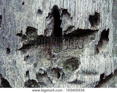 Corteza de palmera con marcas y huecos