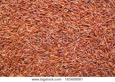 long red rice background, backdrop or texture