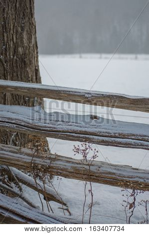Wintery background of a split rail cedar fence with a sprinkle of snow and tree trunk close up.