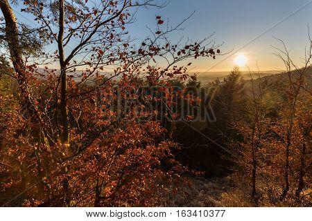 Trees lit by the setting sun. Moravian landscape Pametice.