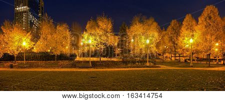 The trees and lights in Millenium Park. Chicago Illinois.