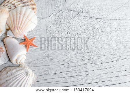 Top view of sea shells and orange sea star over wooden textured background.