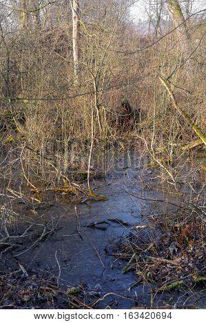 frozen swamp in the bush on wilderness