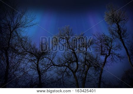 Silhouettes of bare trees on a dark blue night sky The dark and slightly sinister picture depicting the silhouettes of bare trees against the backdrop of night sky.