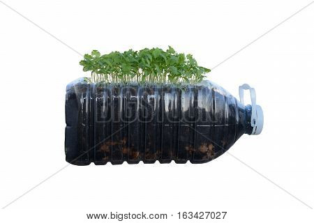 Recycle plastic bottle for organic vegetable nursery on white background.
