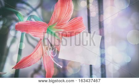 The Orange Flower Of Lily, The Room Plant, The Words On The Paper Sticker