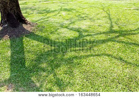 shade of a tree branches on green grass