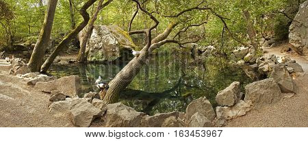 Small lake in the old park in the Crimea.