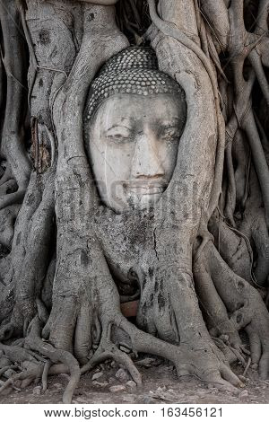 Head of buddha image in the tree at Wat Ma Ha That temple, Ayutthaya, Thailand