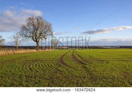 Newly Sown Wheat Field