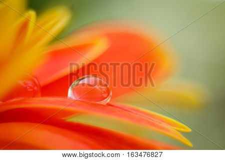 Orange daisy colors in water drops with bright orange background