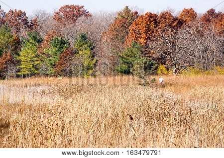 man jogging in the fall in distance
