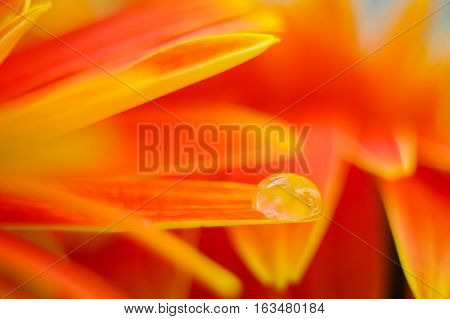 Orange daisy colors in water drops with blurry orange background