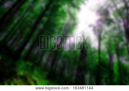 Blurred background of the forest and a beautiful sun at its zenith: best for web usage