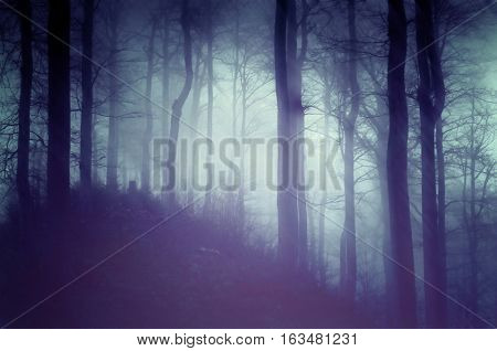 Dark blue forest with a mysterious mist