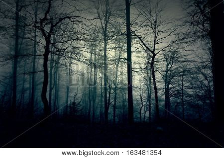 Dark blue forest with a magical mist. Black woods
