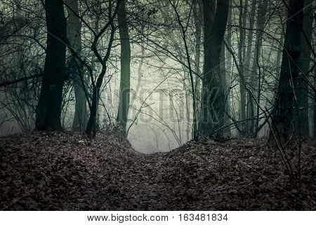 Dark forest landscape. Trees silhouettes. The path in the haunted woods. Blue filter