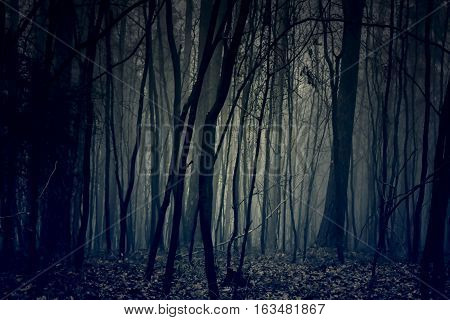 Gloomy and dark blue forest. Black woods