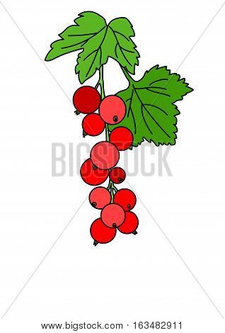 Sprig of red currant with a round ripe berries and green leaves on a white background.