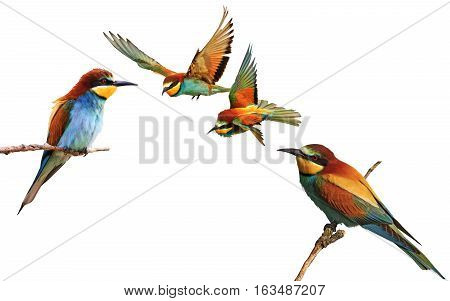 set of colored birds in different poses, birds of paradise, bee-eaters, iridescent colors