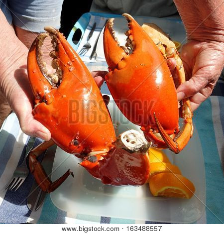 Seafood lunch Large cooked Mud Crab Nippers. Queensland Australia.