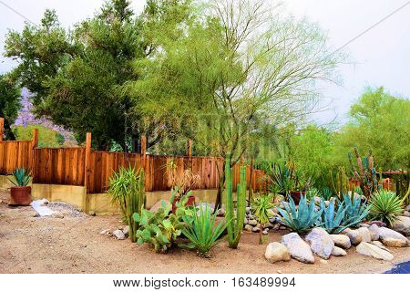 House with a drought tolerant yard including chaparral plants and cactus surrounded by a rustic wooden fence taken in a Southern California neighborhood