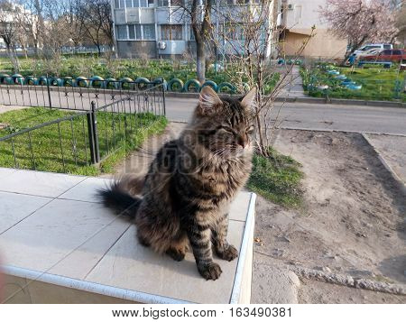 Dark red yard cat sitting on the parapet of the tiles spring day
