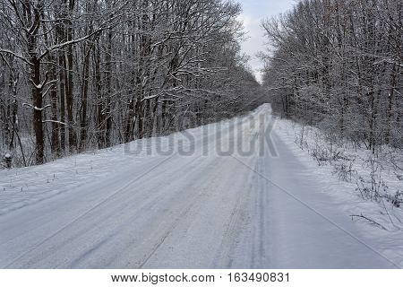 The road through the winter woods. Everything is covered with snow. Straight section