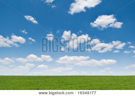 grasveld en de blauwe hemel