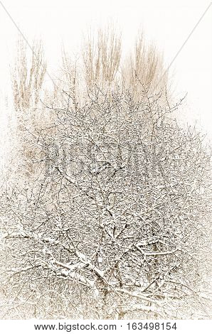 winter landscape trees covered with snow and hoar frost, tinted foto