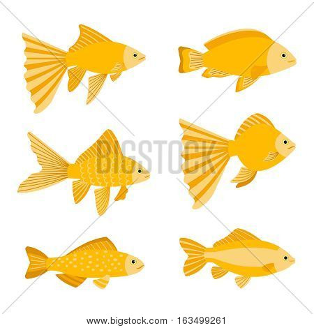 Goldfish set isolated on white background. Yellow gold fishes icons vector illustration. Set of golden fish with tail for aquarium