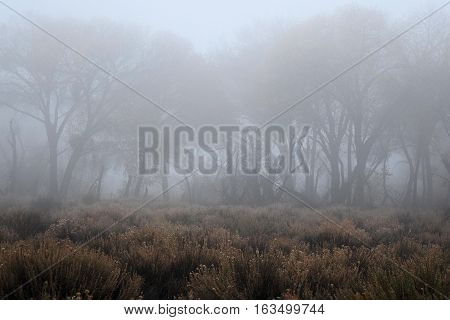 Meadow with a forest with tall deciduous trees beyond taken in the fog