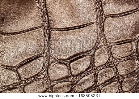 Texture of genuine leather closeup, embossed under the skin a brown reptile, background