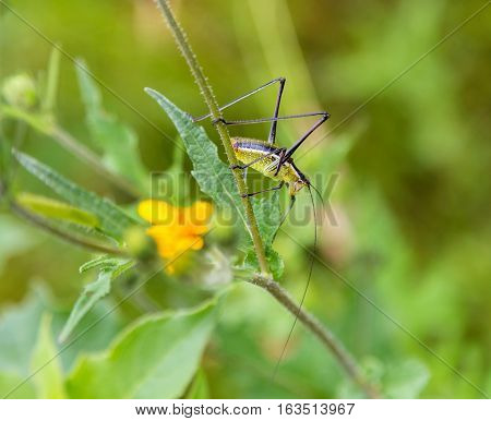 Katydids are found in Mexico. Similar to grasshoppers,you can find them in grasslands, prairies, meadows and other grassy or weedy areas, especially near swamps, creeks, and other damp areas in Mexico