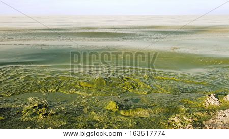 Polluted water in lake or river has intensive green color. Algal bloom is a result of environmental pollution that leads to global warming and climate change on the Planet. Green waves are crushing.