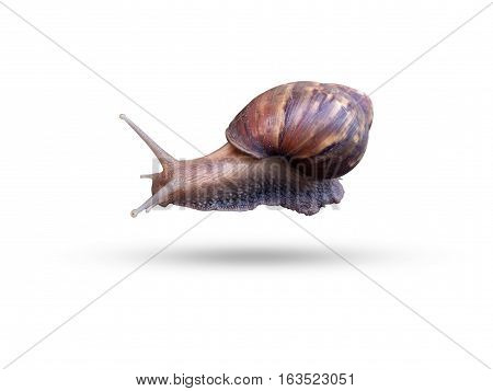 Snail crawling on the grass around the grass wet weather