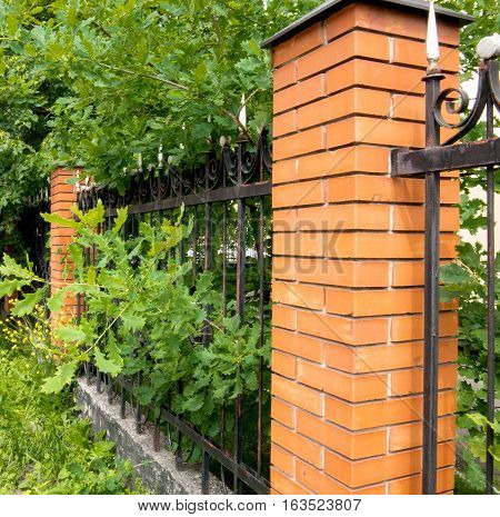 Metal fence and bush green hedge on a warm summer day