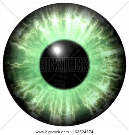 Isolated Green Eye. Illustration Of Green Stripped Eye Iris
