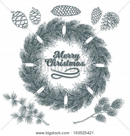 Vector Christmas elements set - cones and branches of pine, spruce, larch, isolated on white. Engraving style. Great for greeting cards, holiday decorations