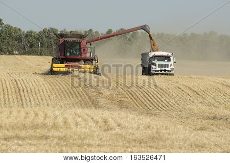 A grain field of wheat being harvested in North Dakota