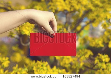 Hand give money in red envelopes - ang pow or red packet to someone for Chinese New Year / Tet Holiday on nature yellow flowers background - Hoa Mai tree (Ochna Integerrima)