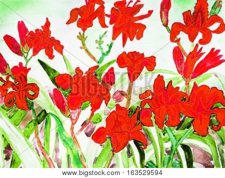 Red daily lilies hand drawn painting water colours.
